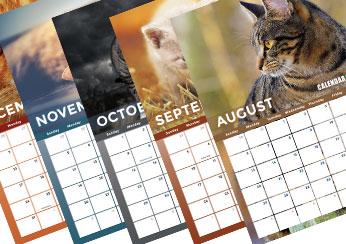 2017 Cat Photo Calendar